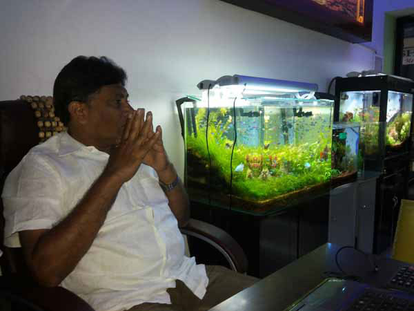 Aquarium Design India | Professional Aquarium Designer in
