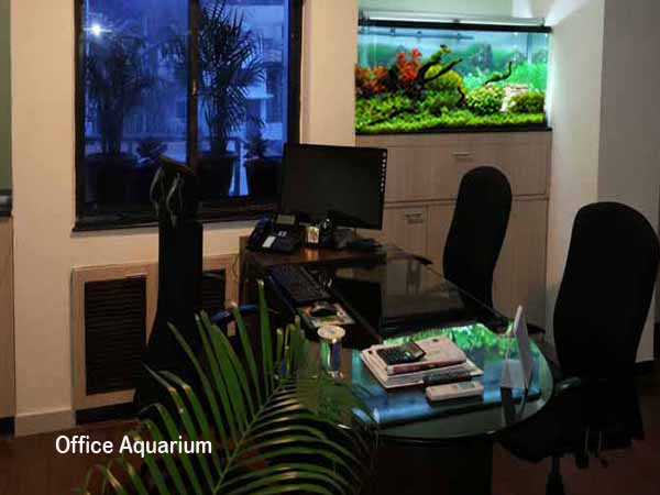 office fish tank. a growing trend in office design is the use of fish tank